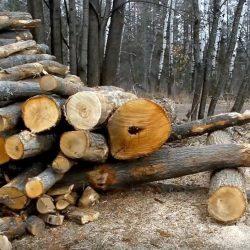 1-palivove_drevo.20-001