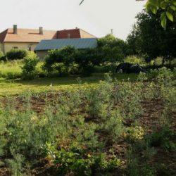 08 Bátka - záhrada
